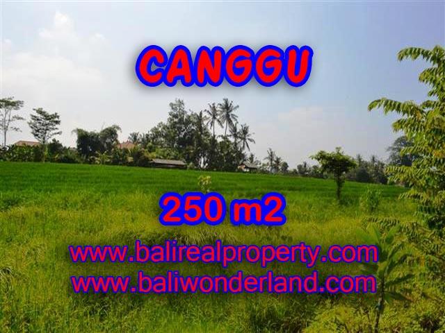 MURAH ! TANAH DIJUAL DI CANGGU TJCG135