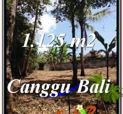 TANAH di CANGGU JUAL 1,125 m2 View Sawah dan tebing sungai