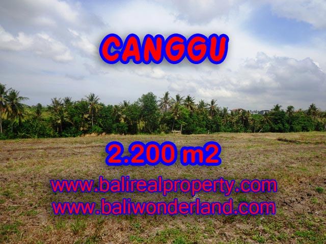 Jual tanah di Canggu 2,200 m2 di Tumbak Bayuh