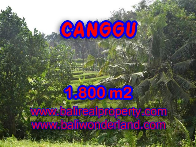 Tanah dijual di Canggu Bali 1.800 m2 view sawah,sungai di canggu brawa