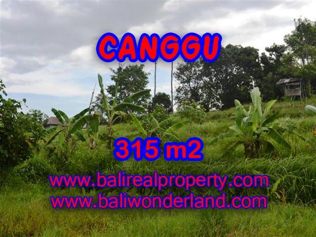 Tanah di Canggu Bali dijual 315 m2 view sawah,sungai di canggu brawa
