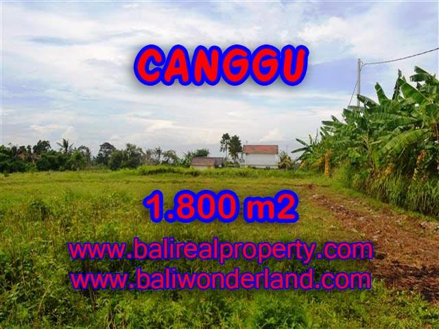 TANAH DIJUAL DI CANGGU MURAH RP 4.750.000 / M2 - TJCG134