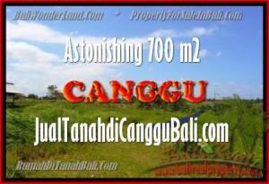 JUAL TANAH di CANGGU 7 Are View Sawah, lingkungan villa