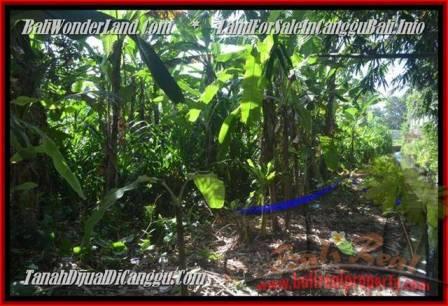 TANAH MURAH DIJUAL di CANGGU BALI 4.3 Are di Canggu Pererenan