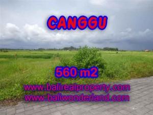 JUAL TANAH di CANGGU 5,6 Are di Canggu Cemagi