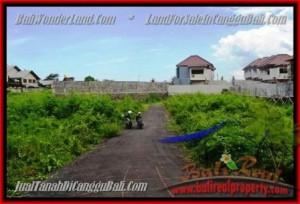 TANAH MURAH di CANGGU BALI DIJUAL 335 m2 di Canggu Pererenan