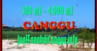 INVESTASI PROPERTY, TANAH MURAH di CANGGU DIJUAL TJCG151