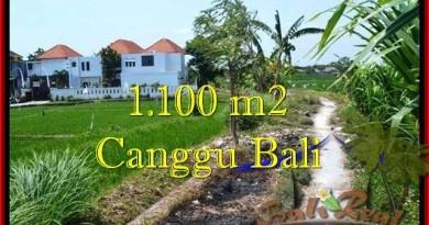 JUAL MURAH TANAH di CANGGU 1,100 m2 View sawah, lingkungan villa