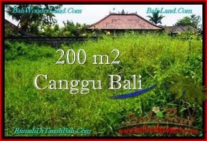 JUAL MURAH TANAH di CANGGU BALI 200 m2  Lingkungan villa