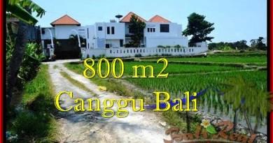 TANAH MURAH di CANGGU DIJUAL 800 m2 di Canggu Brawa
