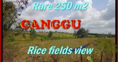 TANAH MURAH DIJUAL di CANGGU TJCG167