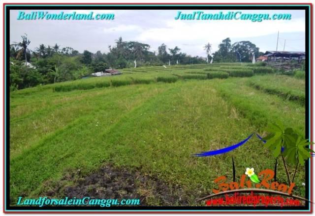 TANAH MURAH di CANGGU TJCG205