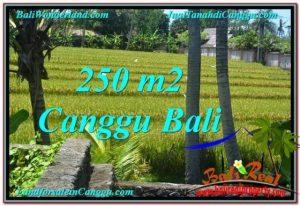 JUAL MURAH TANAH di CANGGU BALI Untuk INVESTASI TJCG207