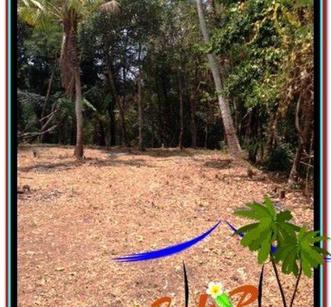 INVESTASI PROPERTY, DIJUAL TANAH MURAH di CANGGU TJCG208