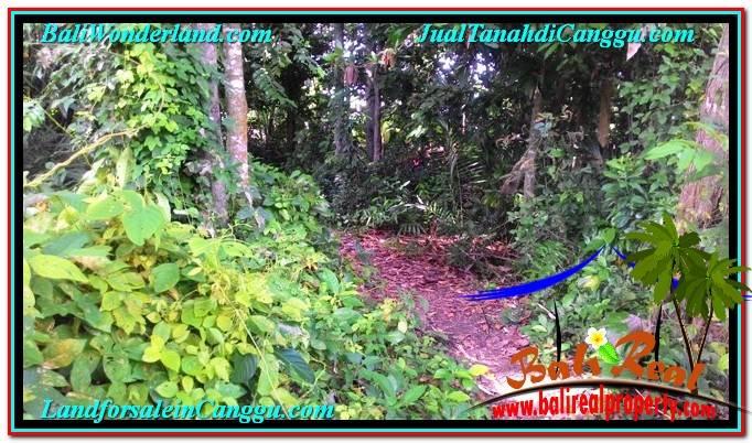 INVESTASI PROPERTI, DIJUAL TANAH MURAH di CANGGU BALI TJCG211