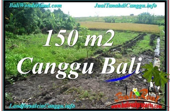 DIJUAL MURAH TANAH di CANGGU 150 m2 di Canggu Pererenan
