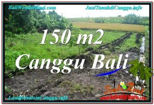 TANAH DIJUAL di CANGGU 150 m2  View sawah