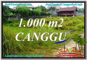 TANAH MURAH di CANGGU 10 Are di Canggu Pererenan