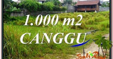 JUAL MURAH TANAH di CANGGU BALI 1,000 m2 di Canggu Pererenan